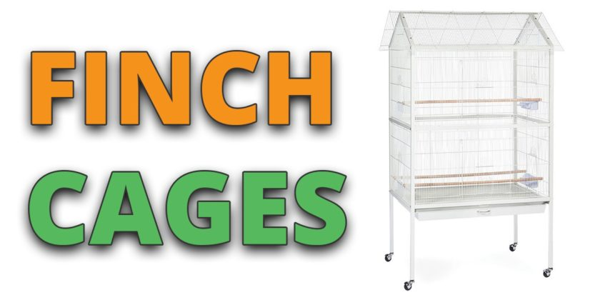 finch cage