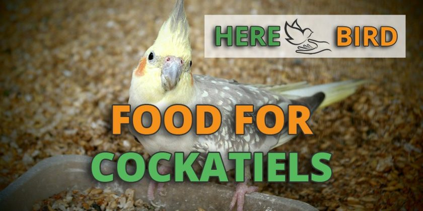 food-for-cockatiels