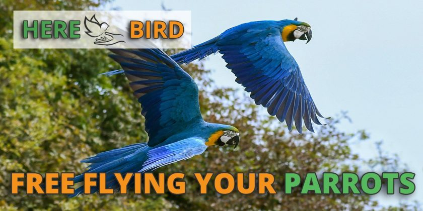 free-flying-parrots
