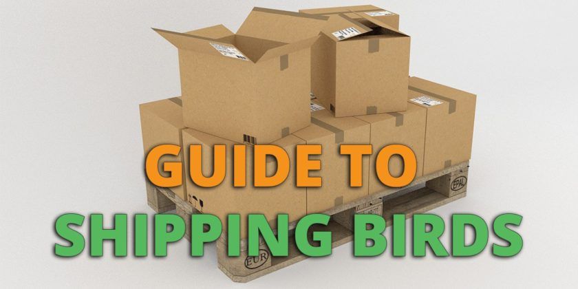 mailing birds