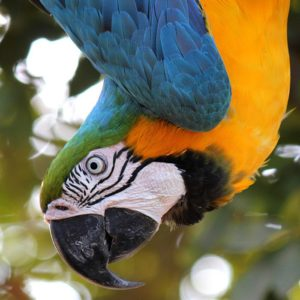 hanging-bird-cage