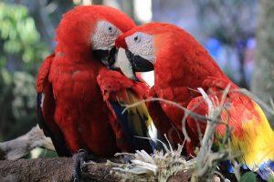 homosexual parrots