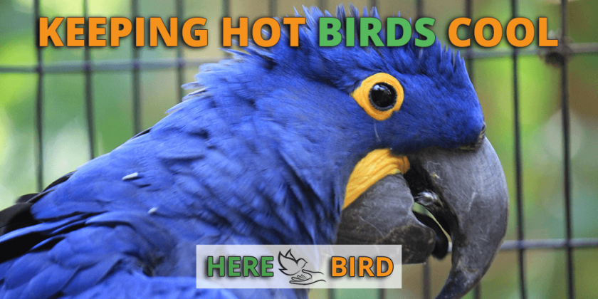 hot-birds-cool