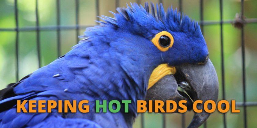 keep birds cool