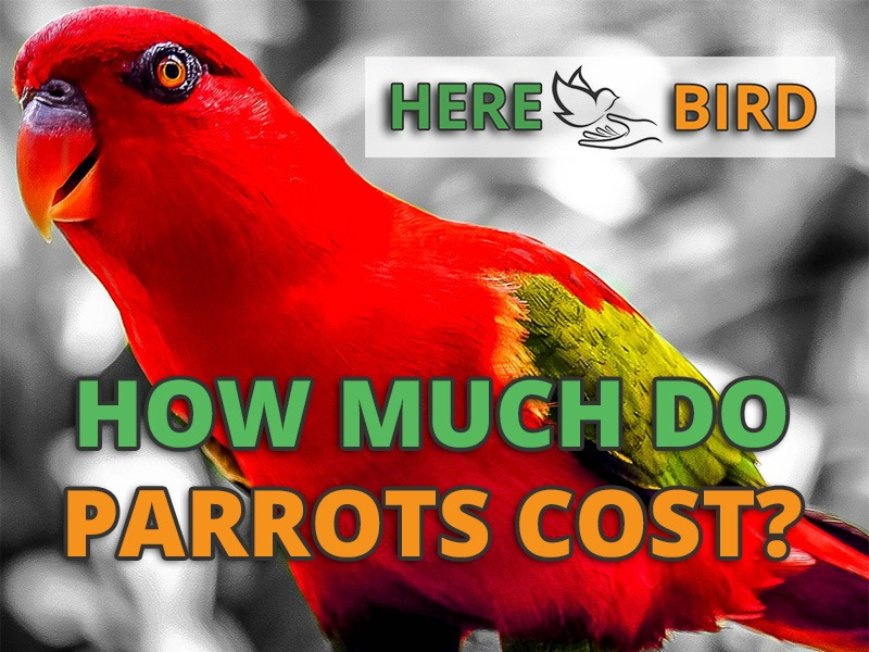How Much Does A Parrot Cost 64 Popular Bird Prices Updated 2019,Beige Color Palette