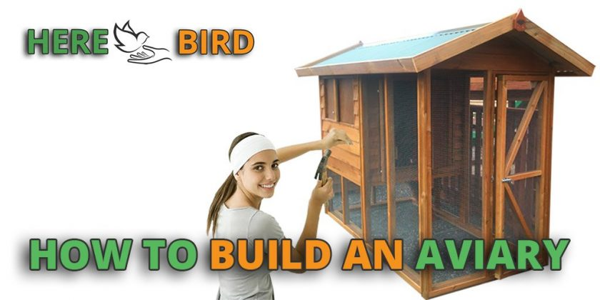 How to Build An Aviary: 10 Steps (with