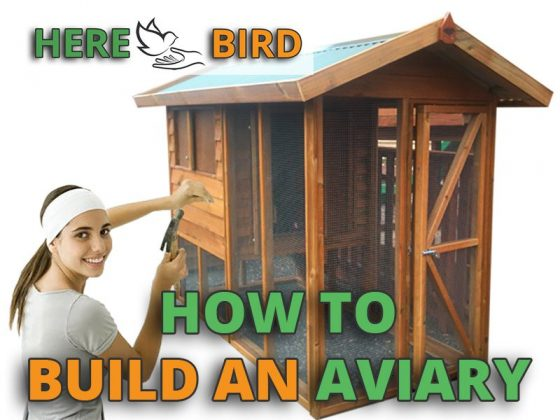 how-to-build-an-aviary