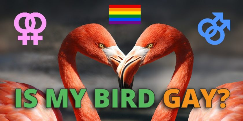 is my bird gay