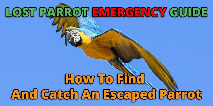 Lost Parrot Emergency Guide