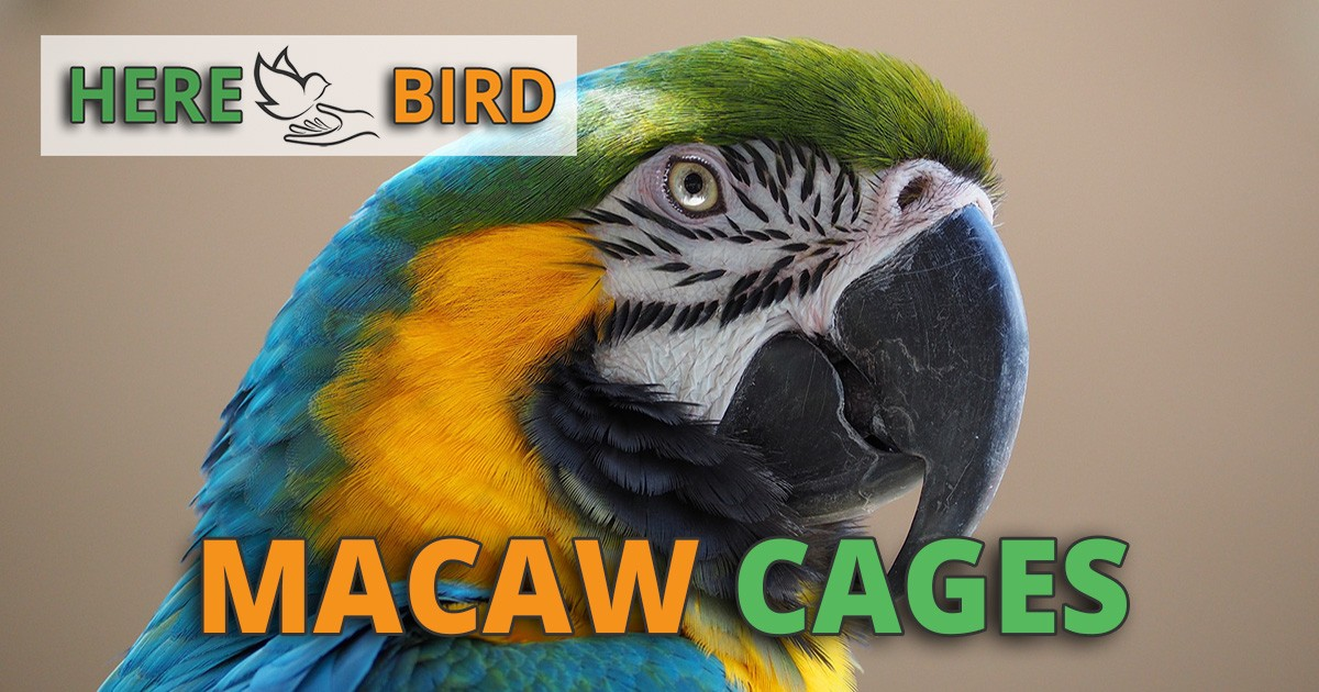 5 Best Macaw Cages For Sale: Cage Setups, Sizes, Reviews