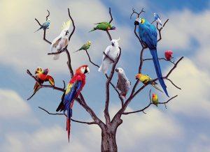mixing-parrots