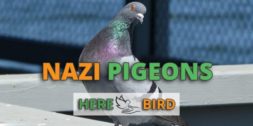 nazi-pigeons