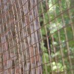 aviary mesh