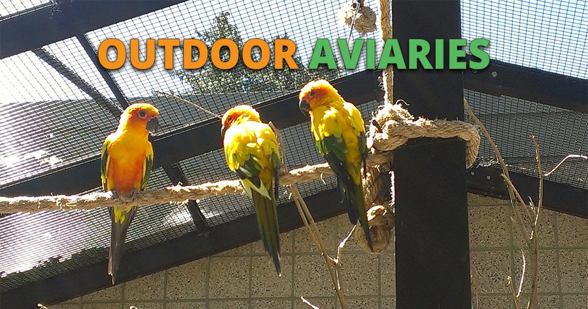 Best Outdoor Aviary For Sale Top 2 Reviews