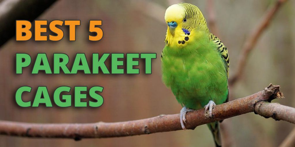 Welcome To Our Guide The Best Parakeet Cages Parakeets Are Group Name Given Small Medium Sized Parrots An Examples Of This Type Species