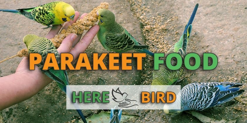 Best Parakeet Food - List for a Healthy Diet & Also Parakeet