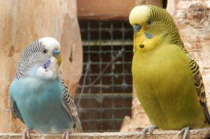 parakeet-training-1