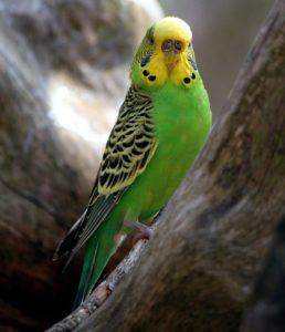 parakeet-training-2