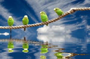 parrot baths