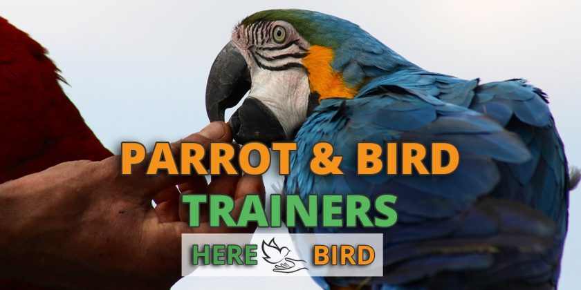 parrot-bird-trainers