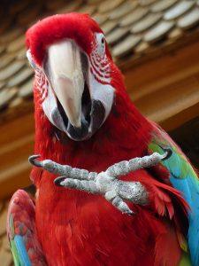parrot body language