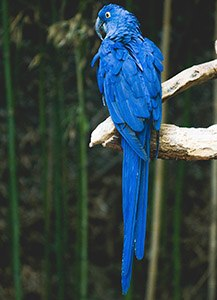parrot-body-language-tail