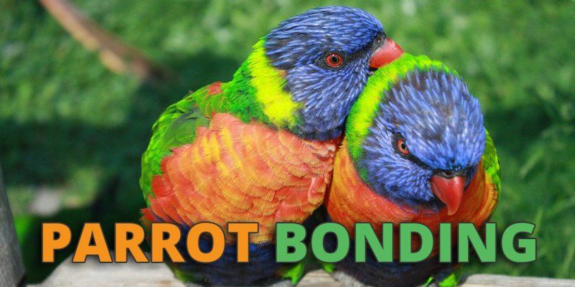 parrot bonding