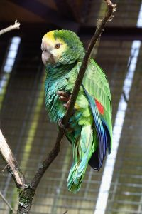 parrot-care-guide