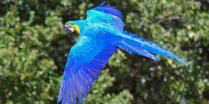 parrot-charities