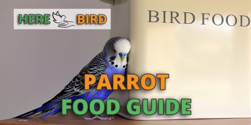 parrot-food