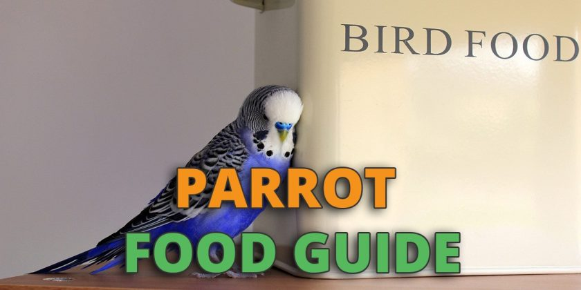 parrot food guide