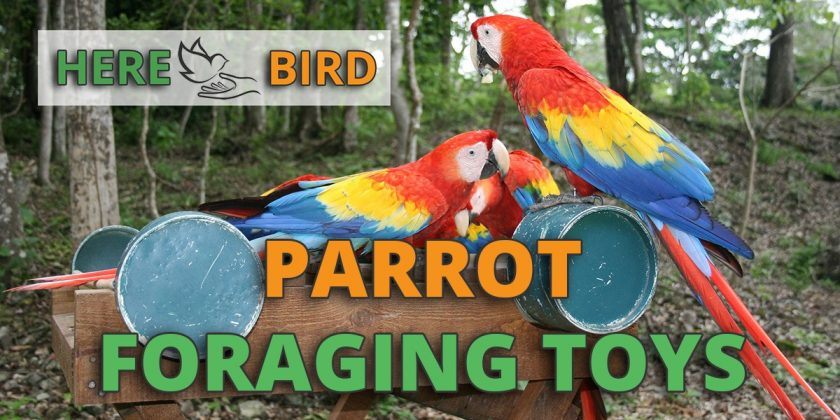 parrot-foraging-toys