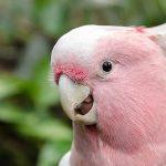 parrot noises