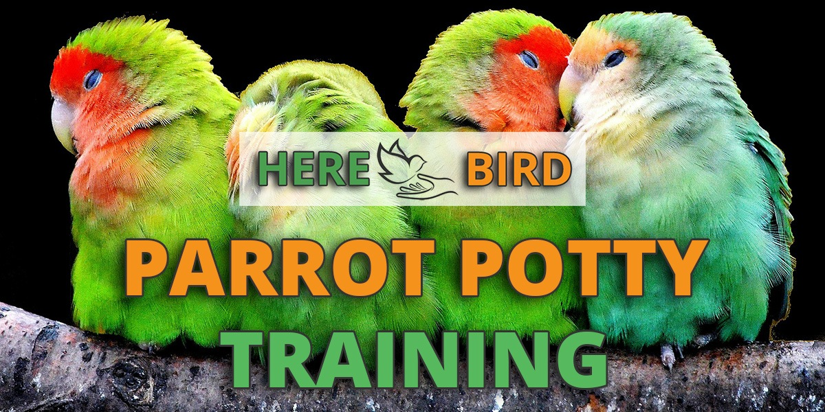 parrot-potty-training