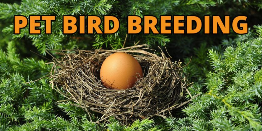 Pet Bird Breeding