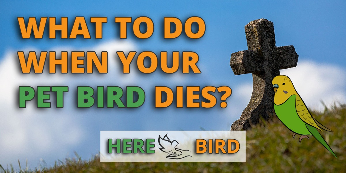 What To Do When Your Pet Bird Dies? Follow These Steps