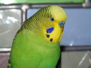 rip-bird