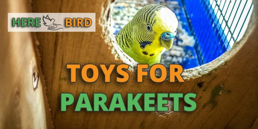 toys-for-parakeets
