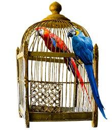 used-bird-cage