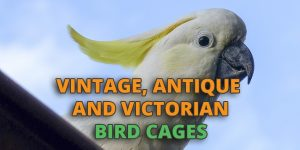vintage-bird-cages