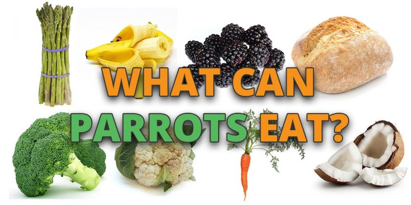 what-can-parrots-eat
